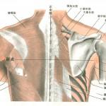 骨盤の前傾・後傾、硬い筋肉