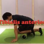 前脛骨筋の機能と筋膜リリースでの調整方法