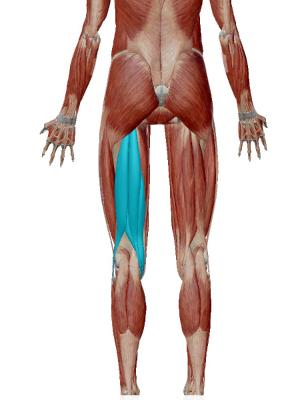 腰痛のストレッチの為にハムストリングをストレッチする。ハムストリングの画像。