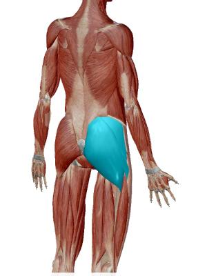 腰痛のストレッチの為に大臀筋をストレッチする。大臀筋の画像。