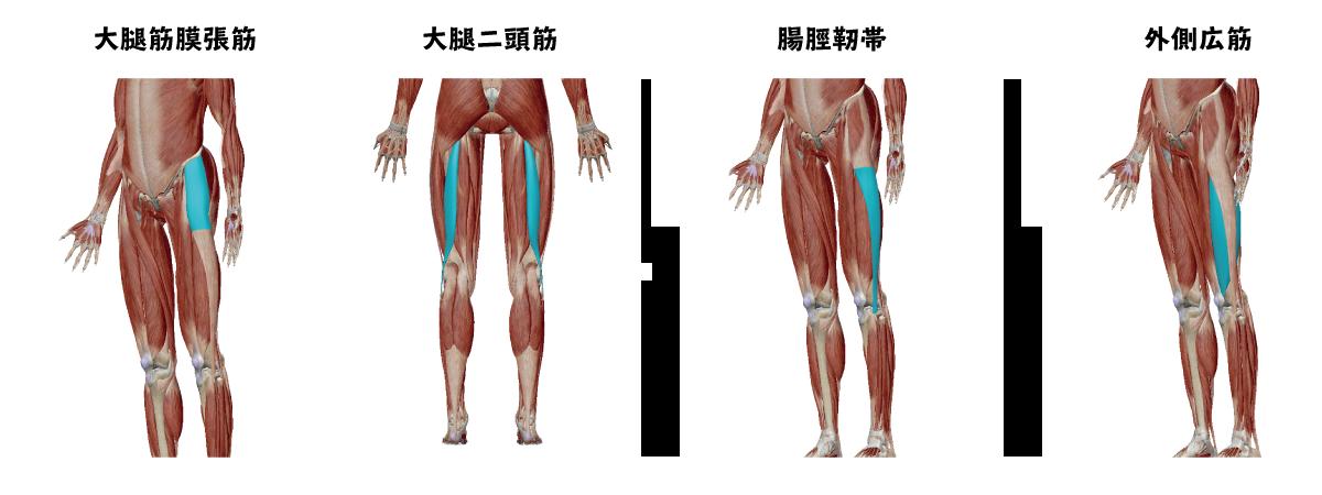 大腿二頭筋と大腿筋膜張筋と腸脛靱帯と大腿四頭筋の外側広筋の画像