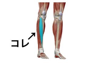 前脛骨筋とはスネの所にある筋肉です。
