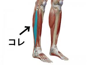 腓骨筋筋膜リリース