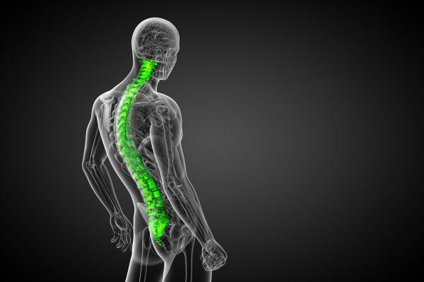 背骨の関節の画像