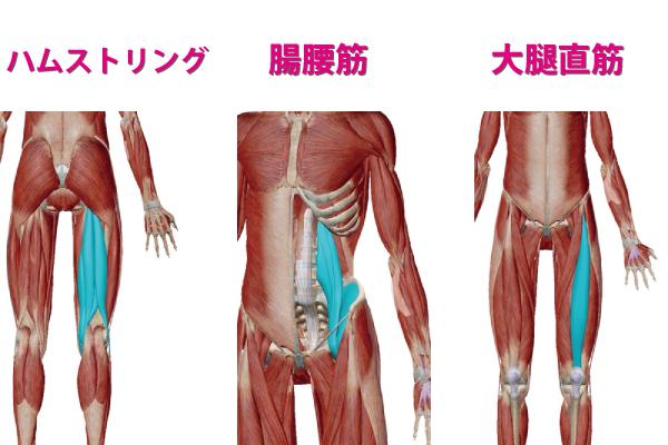 太ももの筋肉であるハムストリングと腸腰筋と大腿直筋の画像