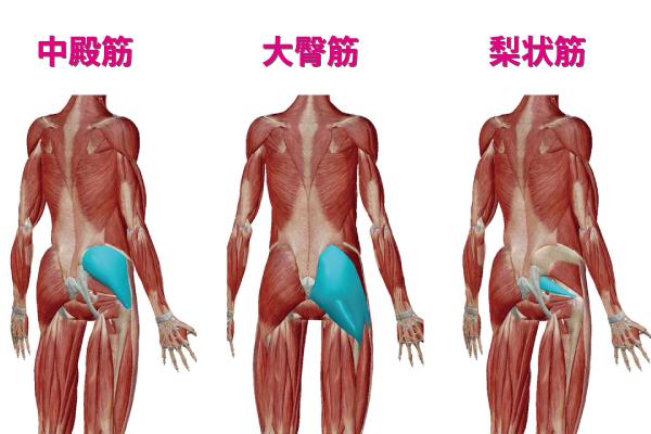 お尻の筋肉である中殿筋と大臀筋と梨状筋の画像