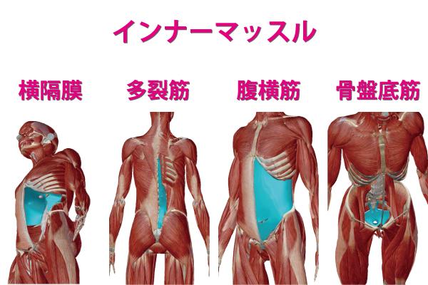 インナーマッスルを構成する横隔膜と多裂筋と腹横筋と骨盤底筋の画像