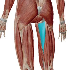 大内転筋のデータ|内股の人は力が入りにくい筋肉