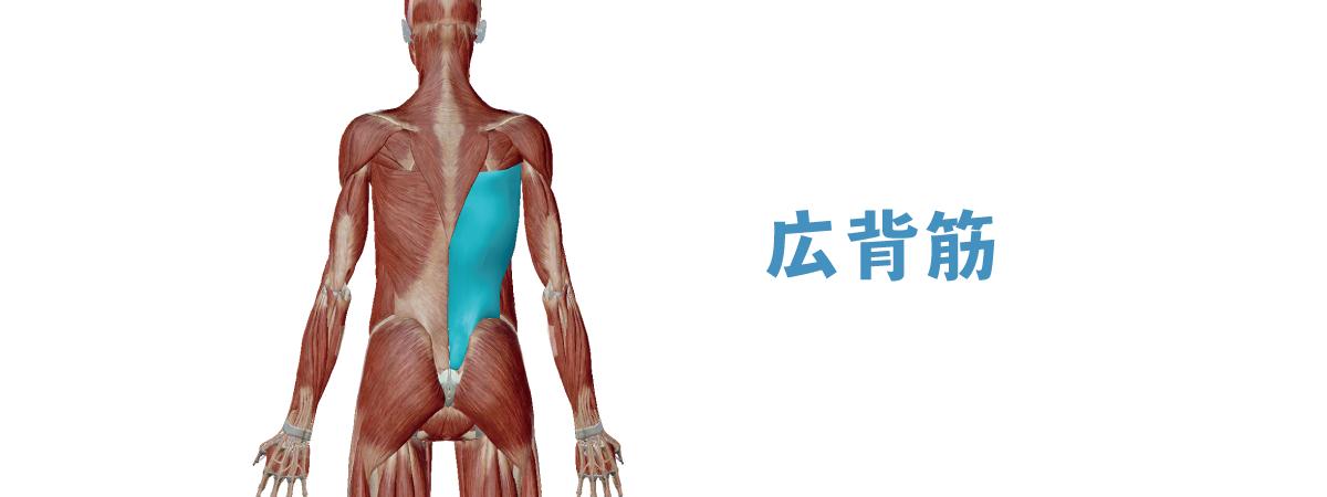 背中 の 筋肉 名称